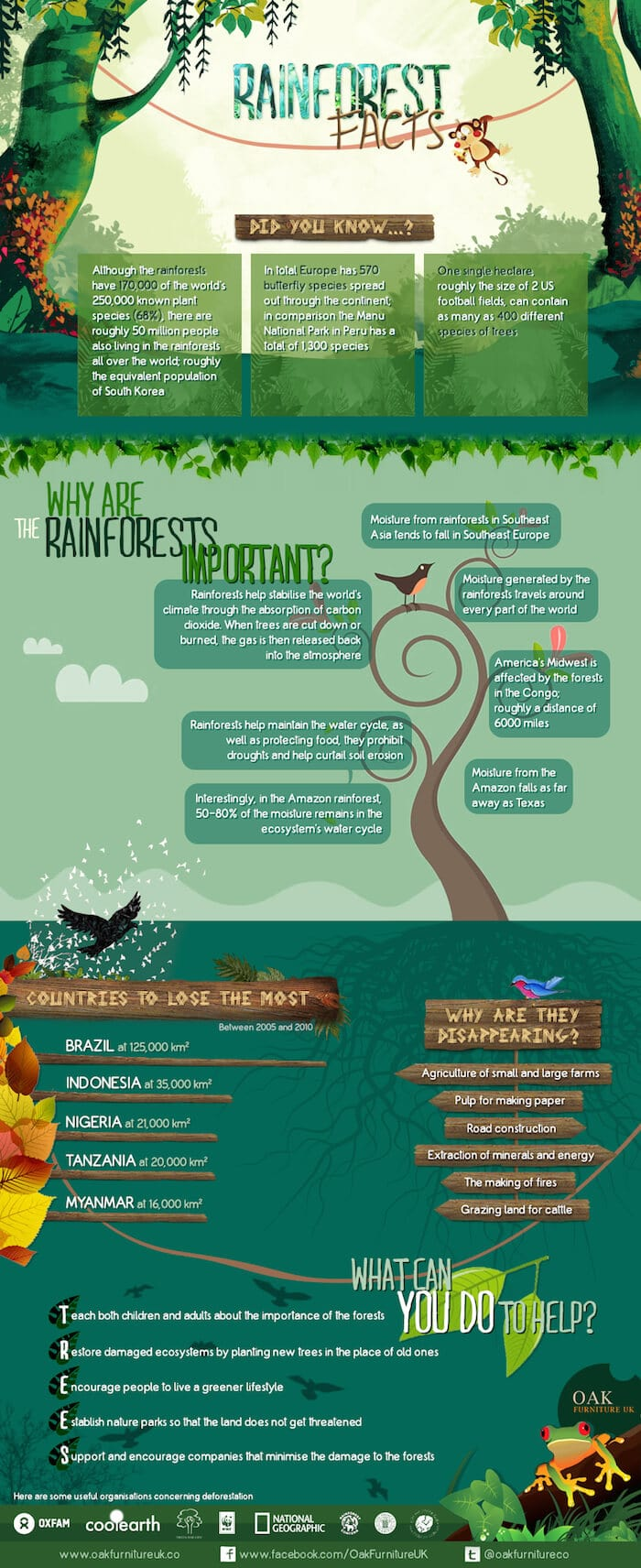 rainforest facts and sustainable solid wood infographic